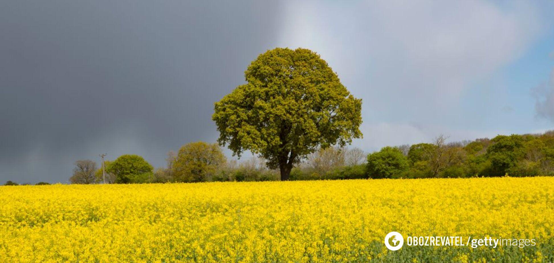 Украину накроет аномальная жара и дожди до конца июня: климатолог дала прогноз