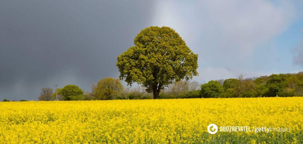 Україну накриє аномальна спека і дощі до кінця червня: кліматолог дала прогноз