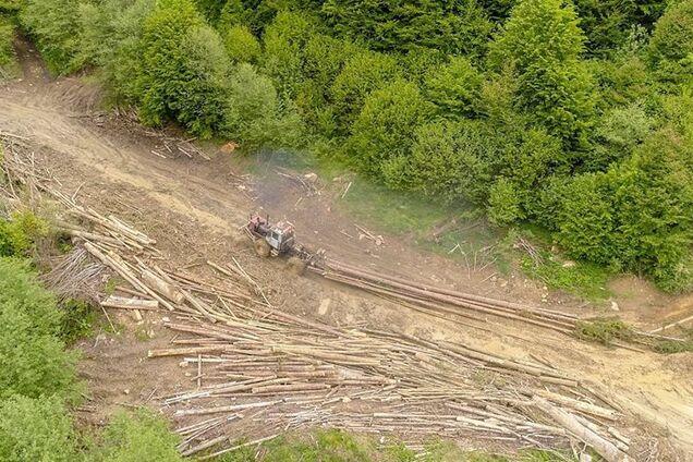 Вирубування лісів у Карпатах