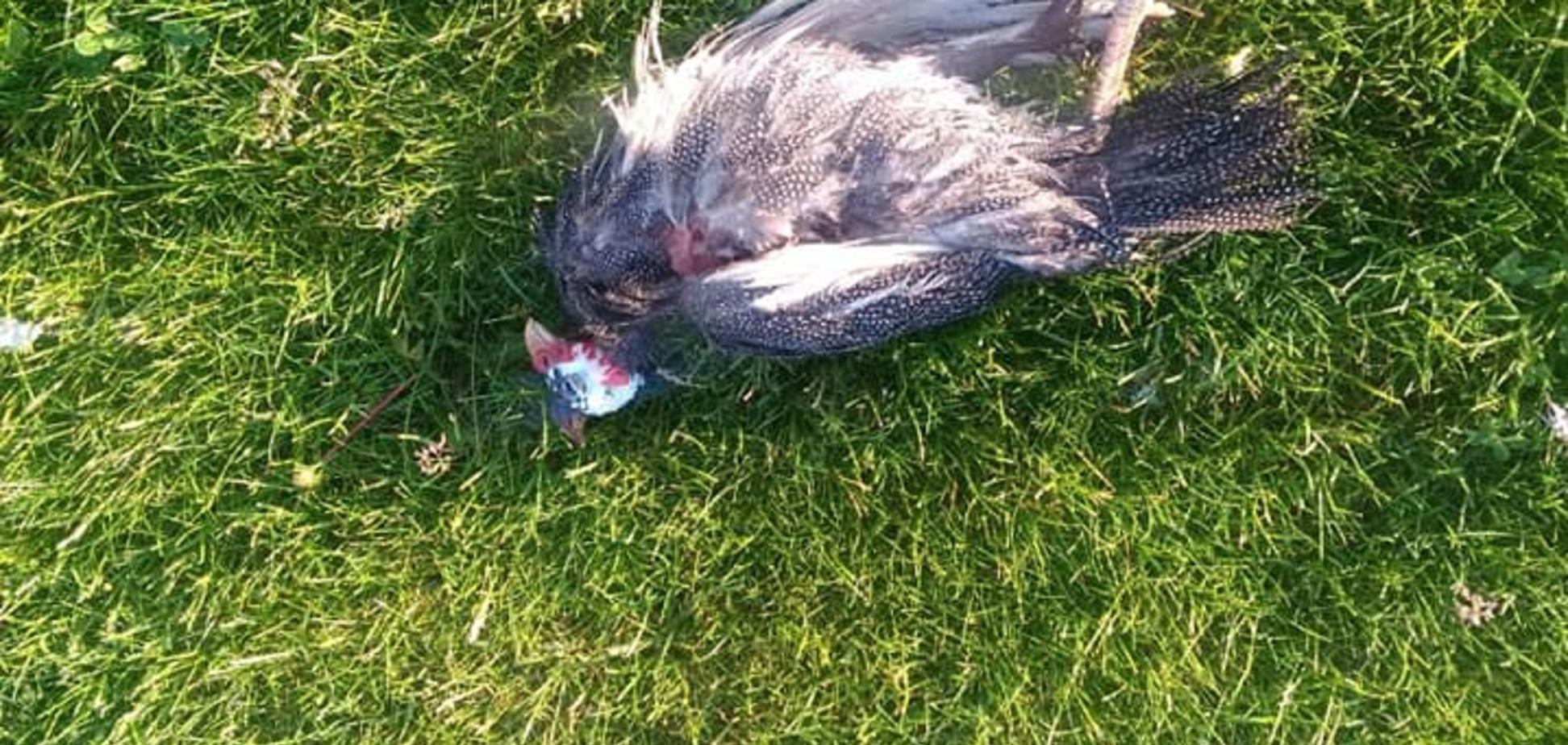 В Днепре дикие звери массово убивают птиц