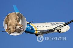 В самолете МАУ на пути в Канаду погибли 38 щенков