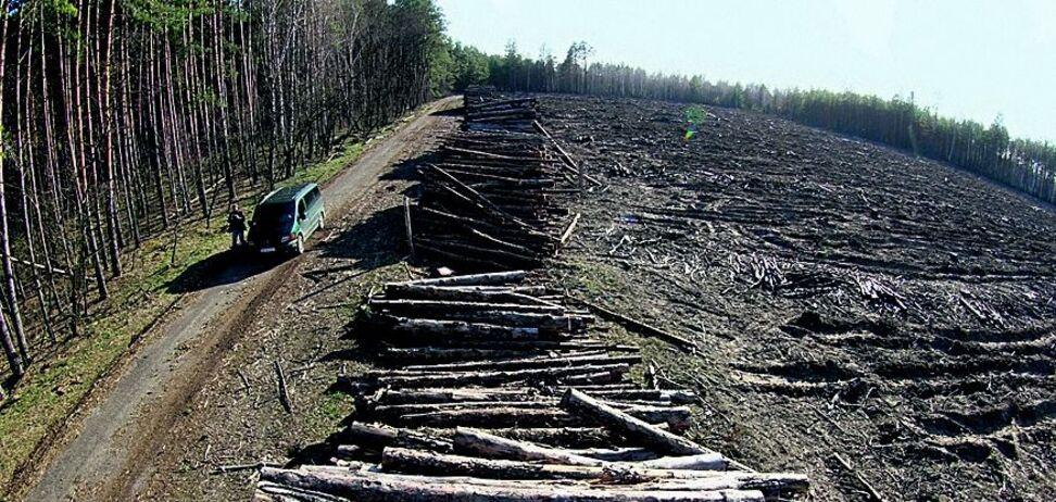 Вырубка леса в Чернобыле: активистов уличили в возможном сговоре с 'любителями наживы'