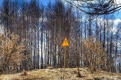 Стало известно, кто 'крышует' вырубку радиоактивного леса под Чернобылем, – СМИ