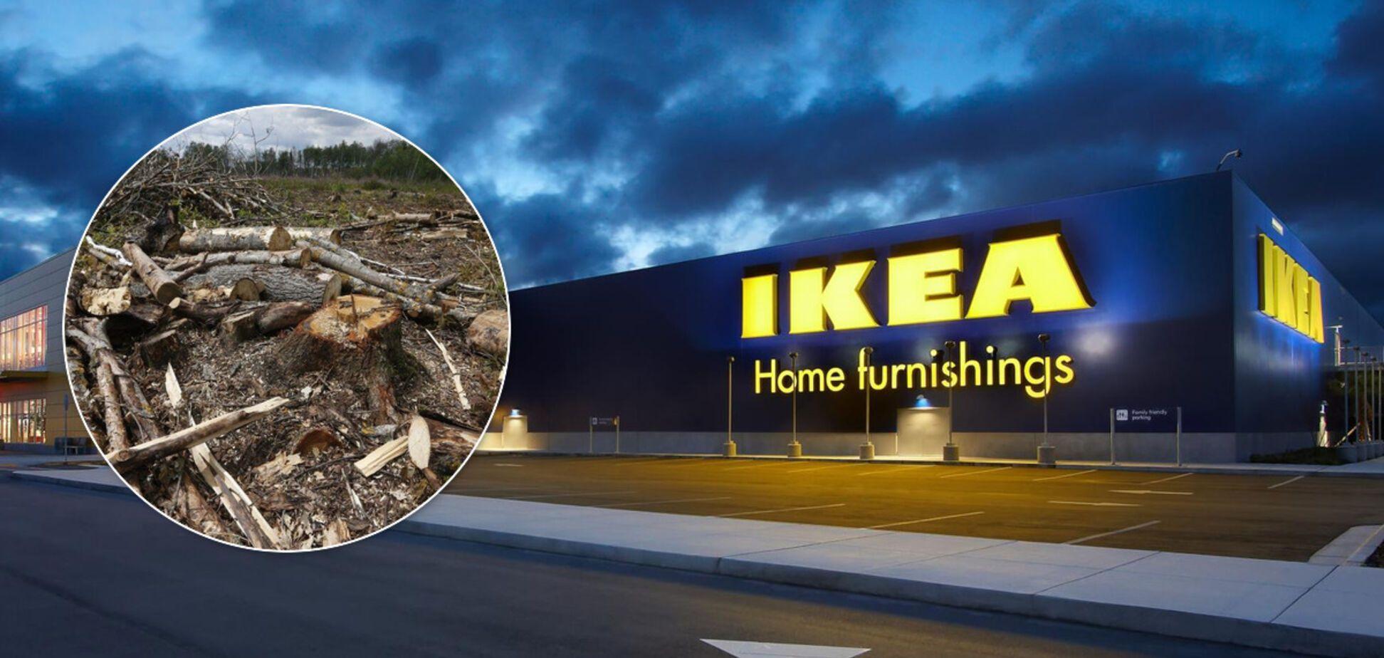 IKEA отреагировала на скандал с незаконными поставками дерева из Украины