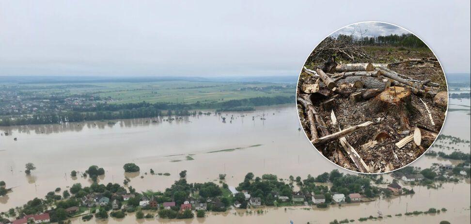 У Кабміні заявили, що вирубка лісу в Україні впала на 20% і не є причиною повеней
