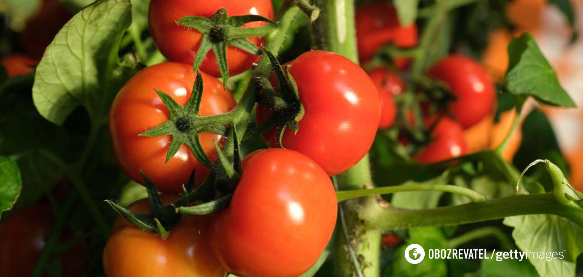 Тривалість зберігання помідорів повинна бути короткою