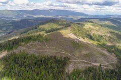 Некоторые экологи намеренно игнорируют вырубку лесов на Закарпатье, - Сазонов