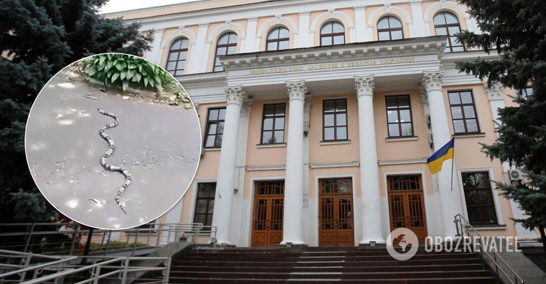 В Киеве под министерством обнаружили экзотическую змею