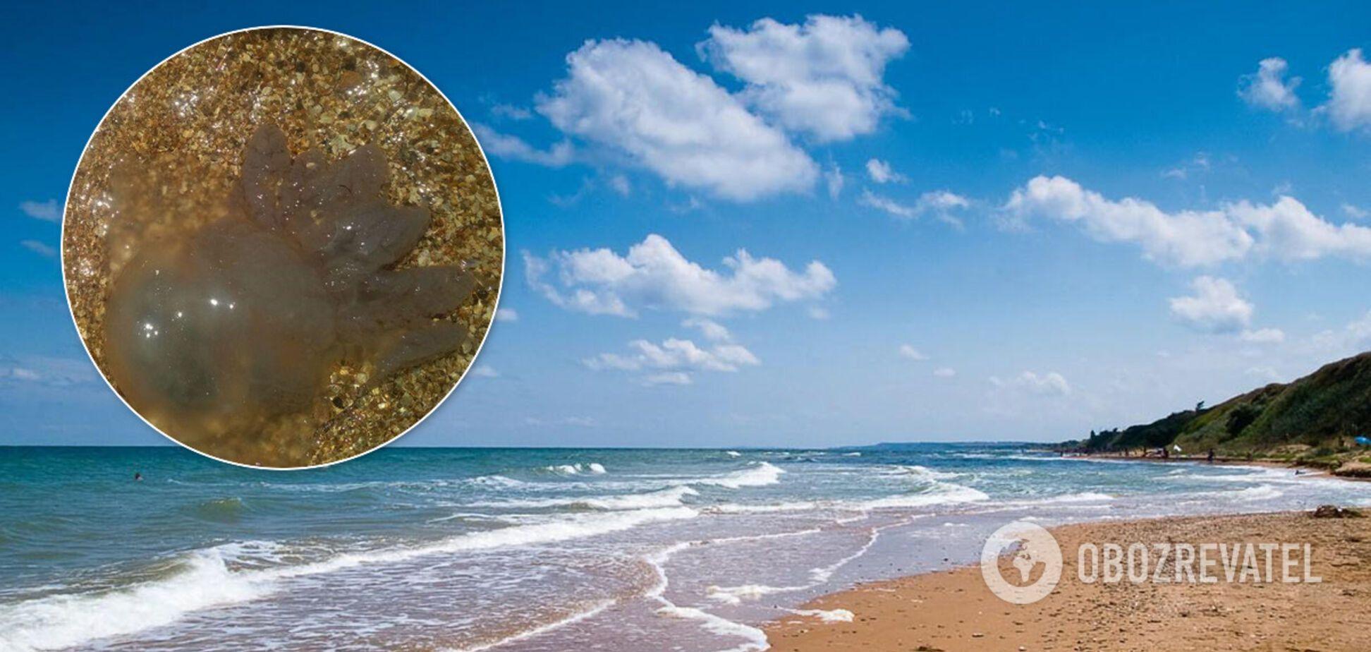 Отдыхающие на Азовском море пожаловались на нашествие медуз