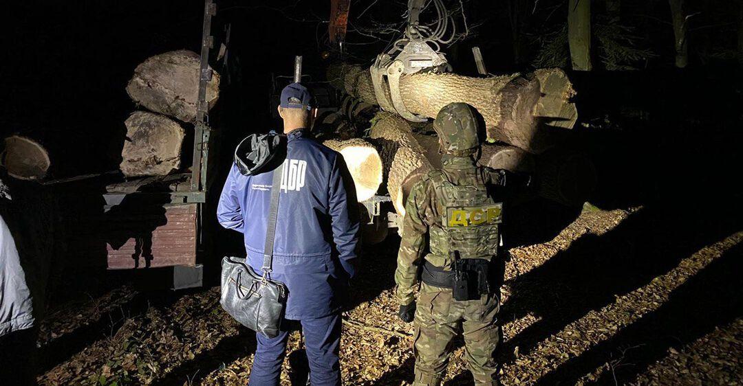 На западе Украины раскрылась крупная незаконная вырубка леса