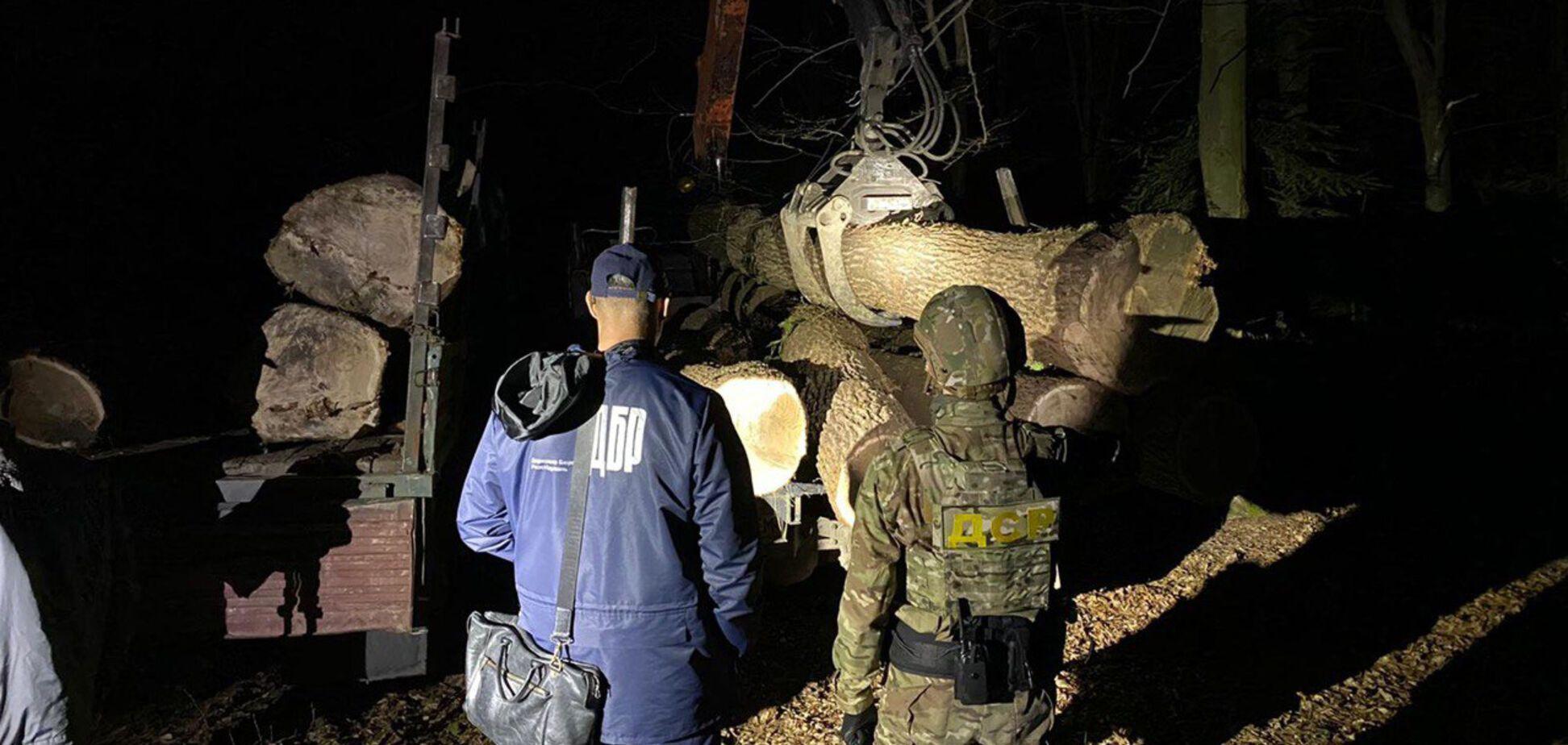 На заході України розкрилася велика незаконна вирубка лісу