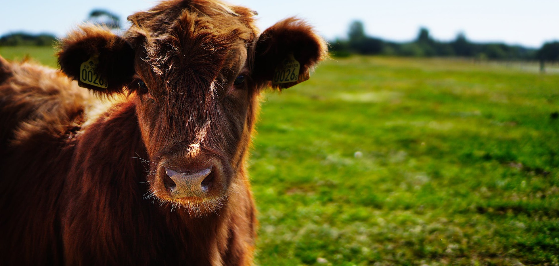 Где вас поджидает счастье? Психологический тест с коровой
