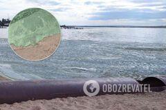 В Николаеве на популярном пляже вода превратилась в 'зеленку'. Фото