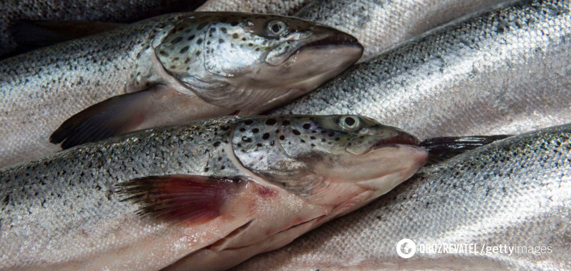 Як дізнатися, чи зіпсувалася риба, сир та інші продукти: корисні поради