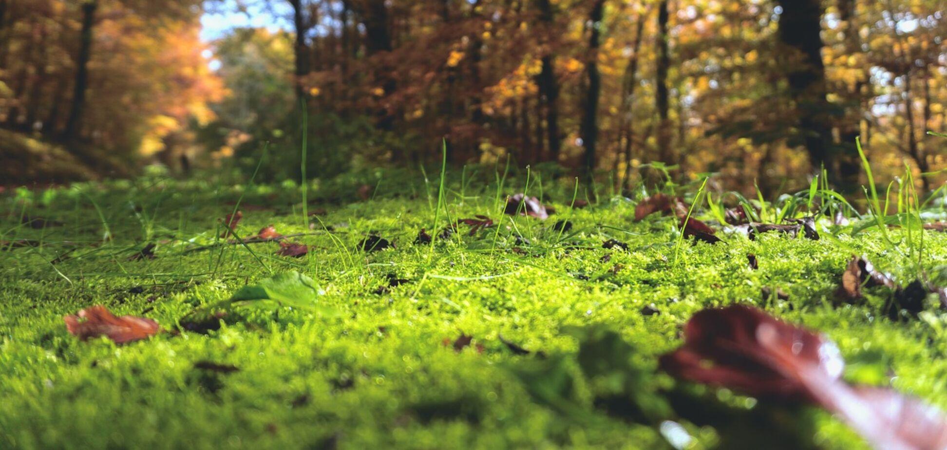 Прокуратура повернула земельну ділянку під Києвом вартістю понад 3 млн грн