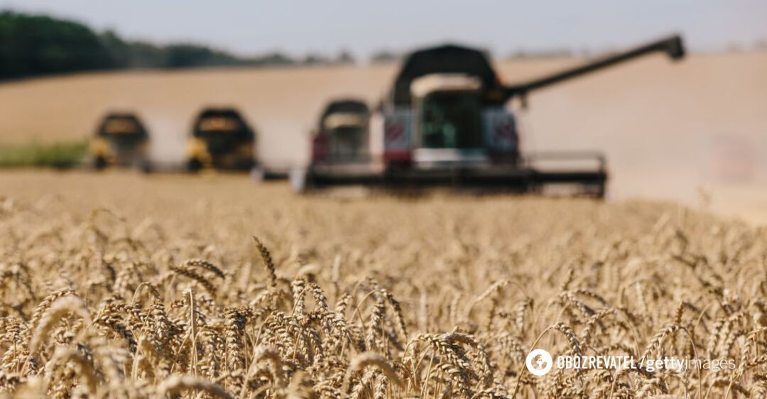 У Гідрометцентрі сказали, чи буде врожай 2020 року