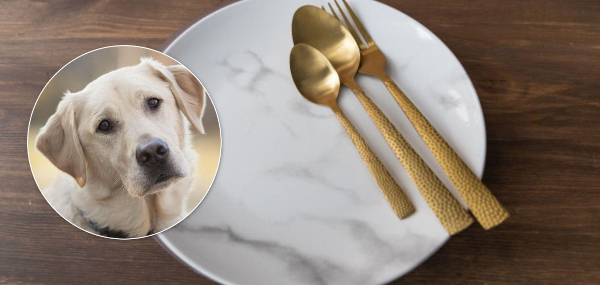 На Винниччине мужчина накормил семью собакой