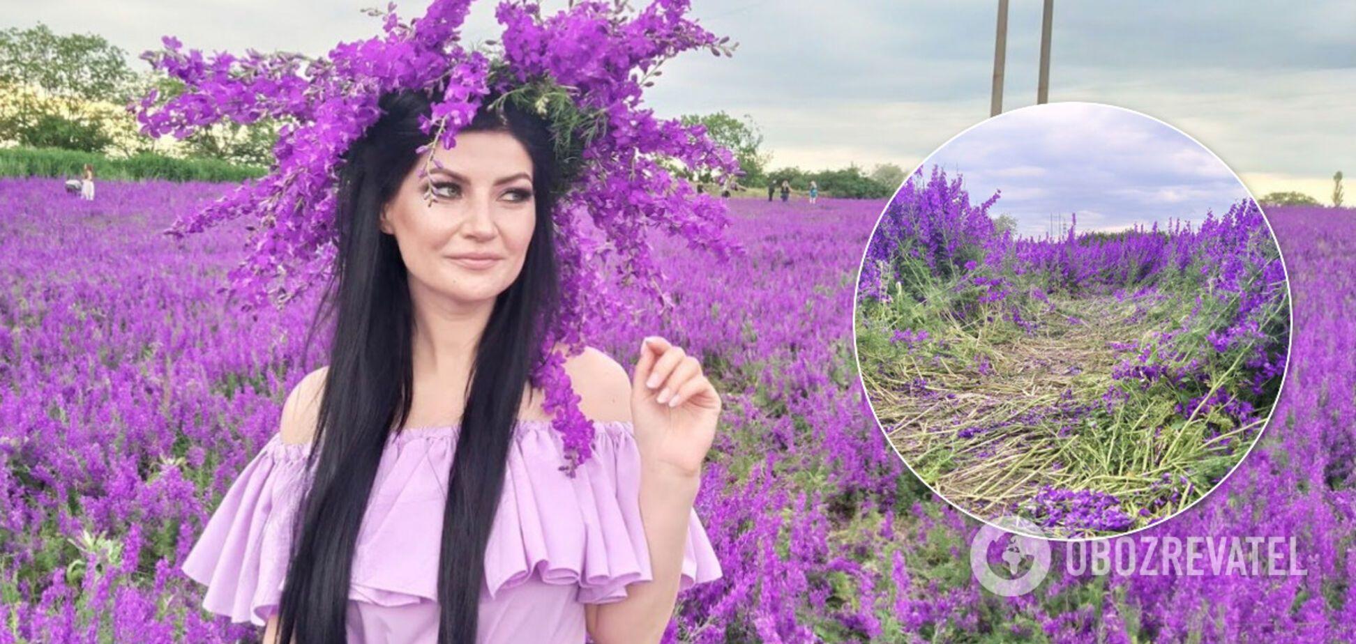 Под Одессой любители селфи уничтожили уникальное 'фиолетовое поле': фото и видео