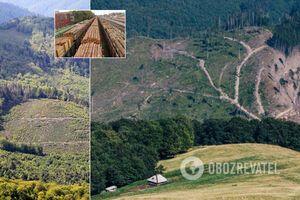 В Украине забили тревогу из-за массовой вырубки Карпат: выводы экологов