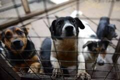 Волонтери Дніпра закликали врятувати бездомних собак з полону скандального харківського притулку