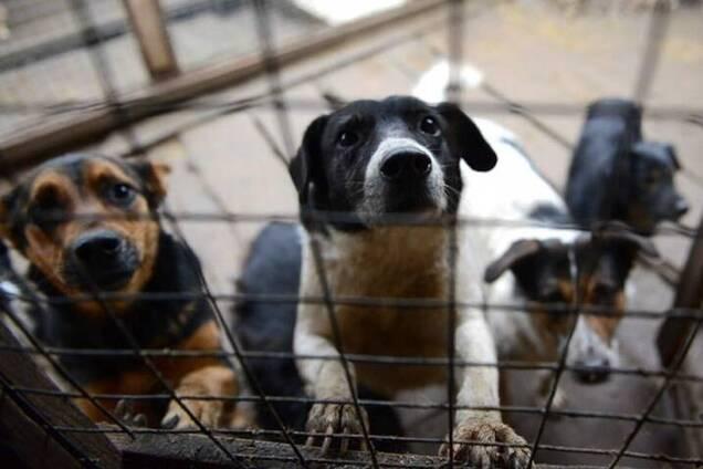 Волонтеры Днепра призвали спасти бездомных собак из плена скандального харьковского приюта