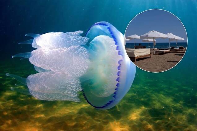 На Азовському морі навала бліх і медуз, які боляче жалять. У чому причина й коли вода очиститься