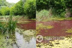 На Черниговщине водоем окрасился в розовый цвет