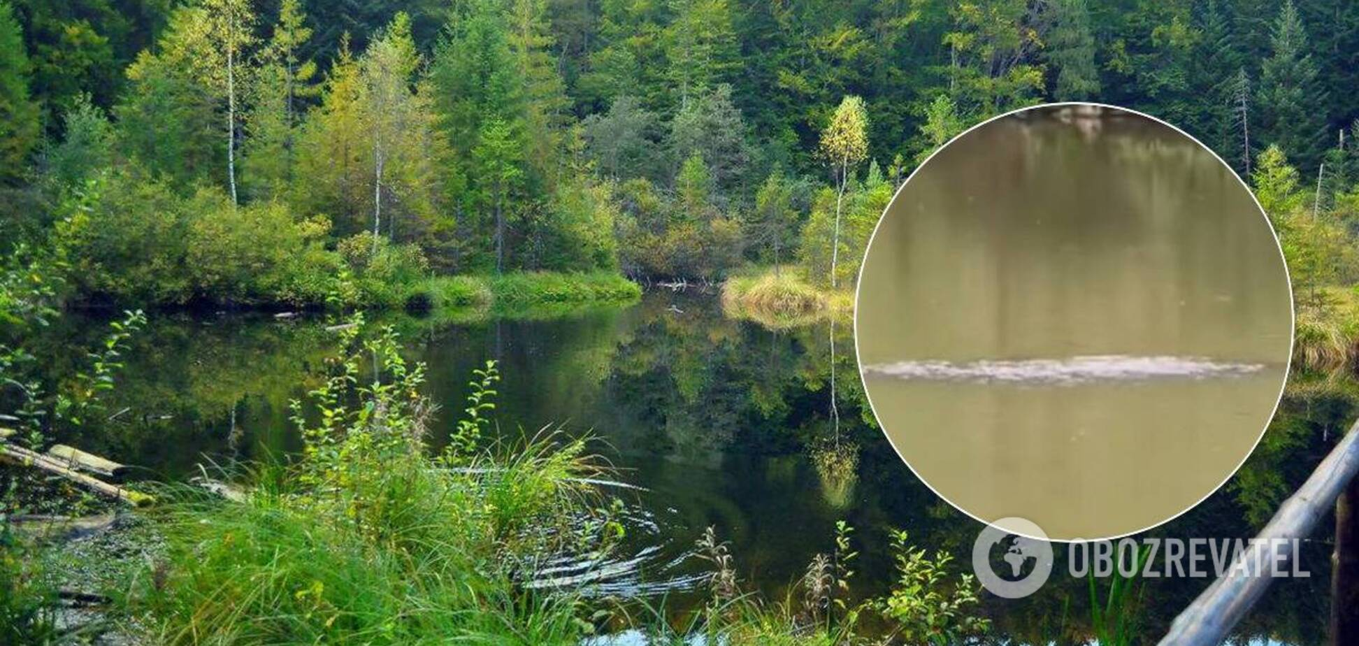 Трехметровое существо в озере попало на видео