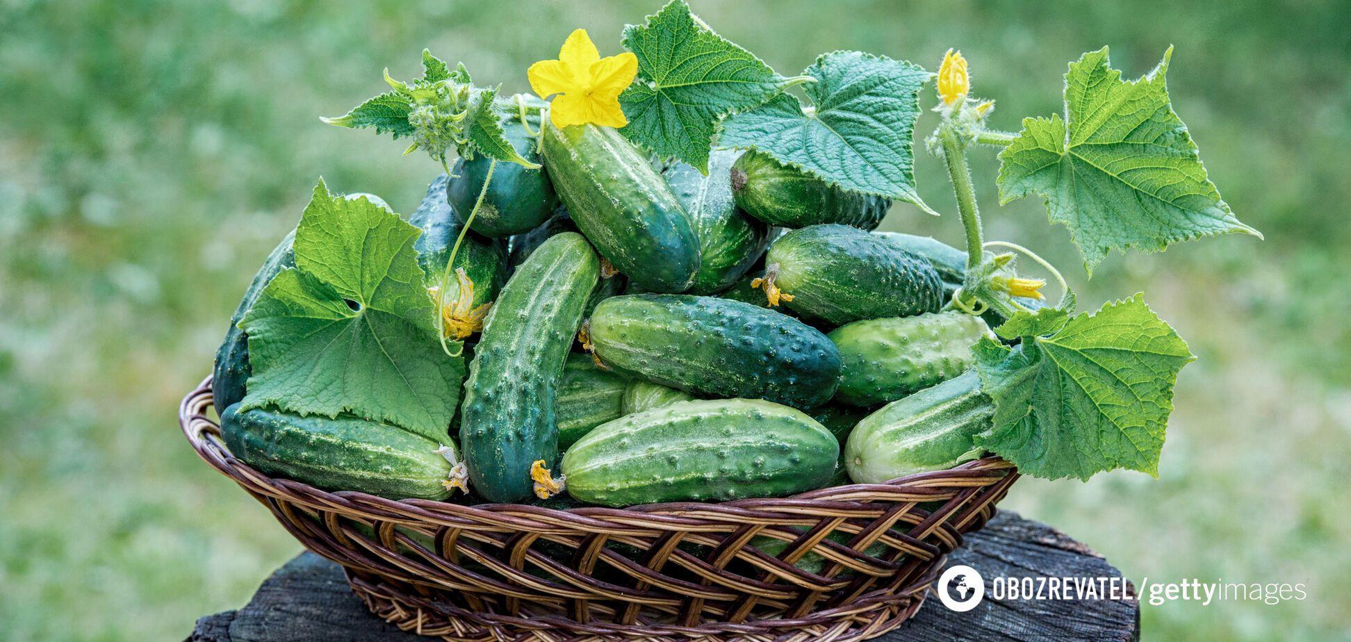 Огірки є гарним джерелом вітамінів і мінералів