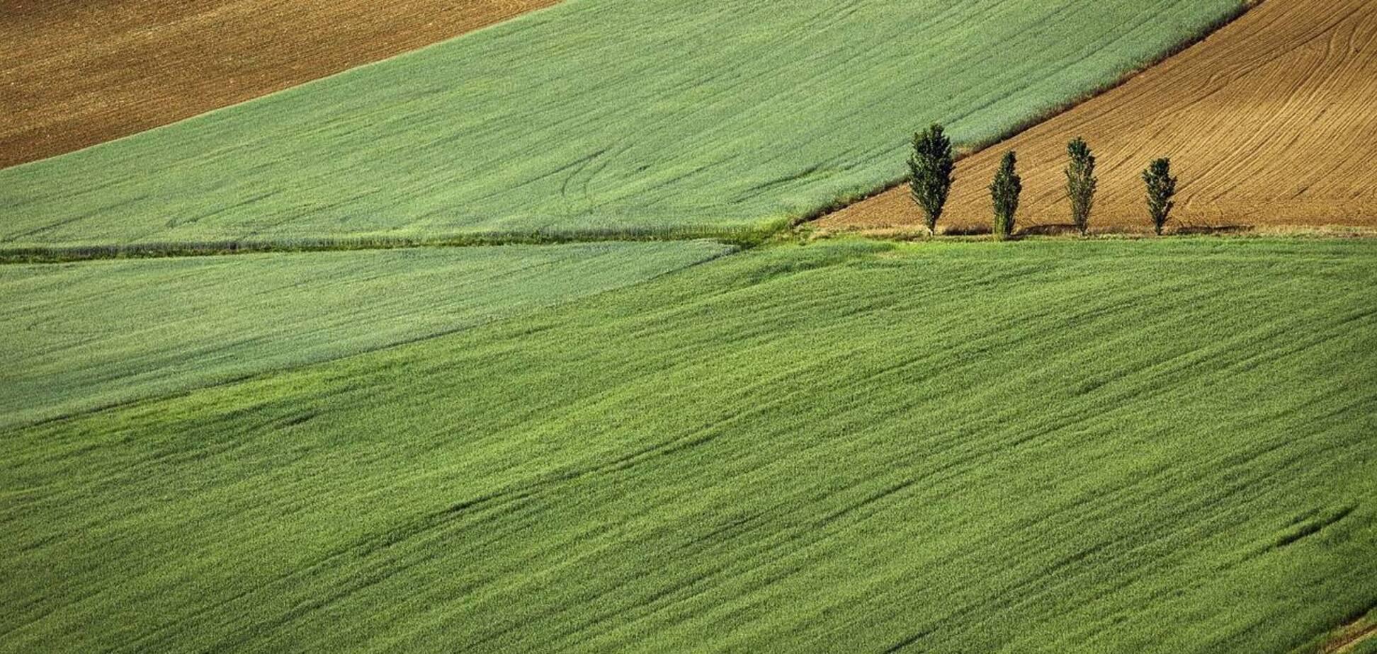 Глава Госгеокадастра рассказал, что будет с теми, кто незаконно приватизировал землю