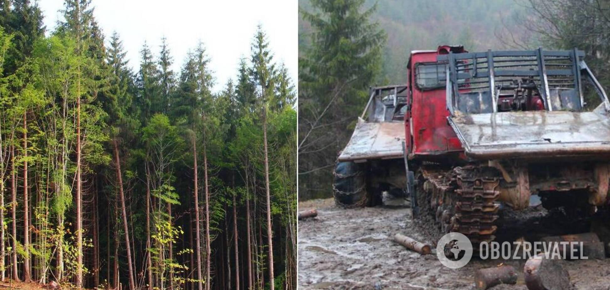 Екологи розповіли про те, що відбувається в Карпатах після ухвалення закону про заборону вирубки лісів