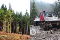 Экологи рассказали о том, что происходит в Карпатах после принятия закона о запрете вырубки лесов