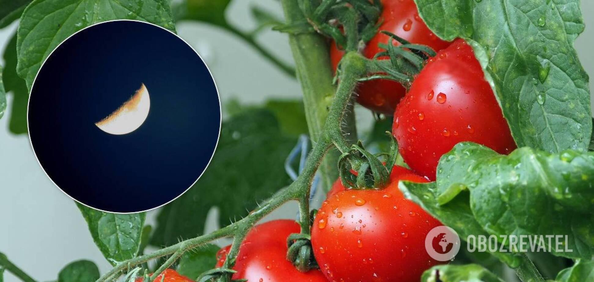 Лунный посевной календарь на август 2020 поможет распланировать работы в саду и огороде