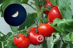 Місячний посівний календар на серпень 2020 допоможе розпланувати роботи в саду і городі