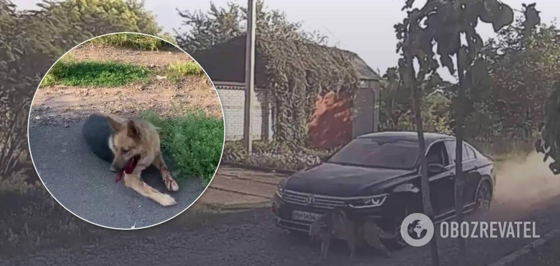 Водій знущався зі свого собаки, збиваючи його на авто