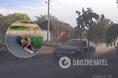 Водитель издевался над своей собакой, сбивая ее на авто