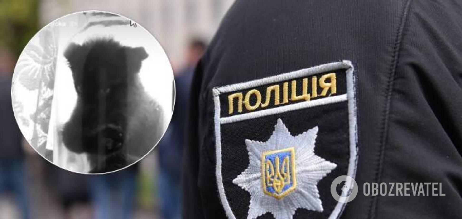 На Львівщині хлопець закрив кошеня в банку, його затримала поліція