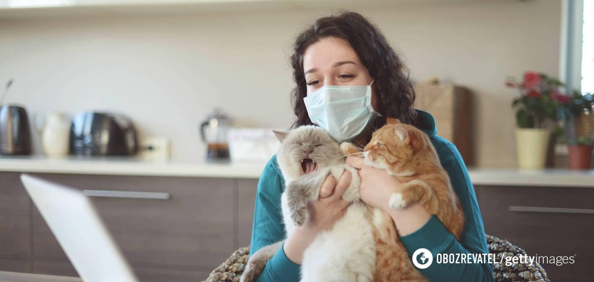 В Британии коронавирус подтвердили у домашней кошки