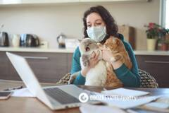 У Британії коронавірус підтвердили у домашньої кішки