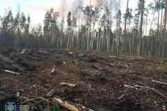 Вирубка лісу в Україні