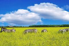 '7 чудес України': запрошує Асканія-Нова