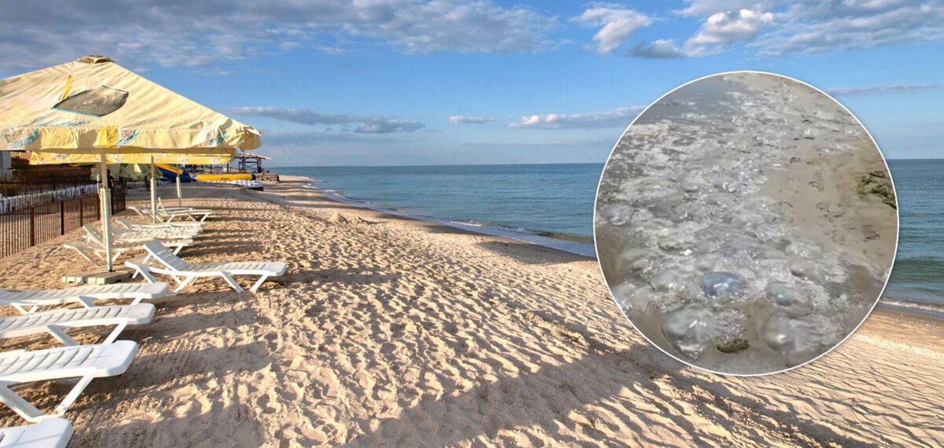 Популярный курорт Украины атаковали медузы