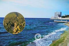 В Одессе 'позеленело' море: как выглядит