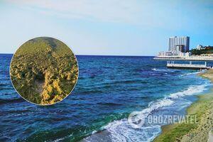 В Одесі 'позеленіло' море: який має вигляд