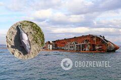 В Одессе на берегу рядом с танкером Delfi нашли мертвого дельфиненка