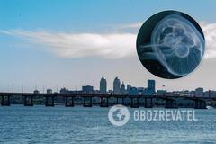 Дніпро заполонили медузи: експерт пояснив аномалію. Фото
