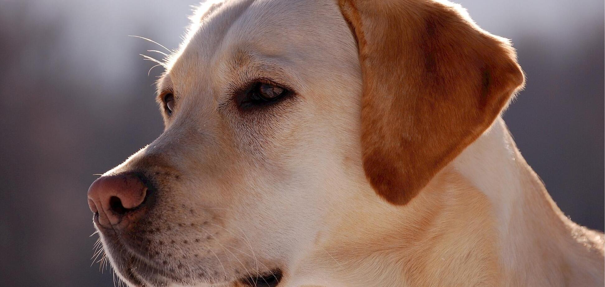 Біологи вивчили зразки більш 100 псів