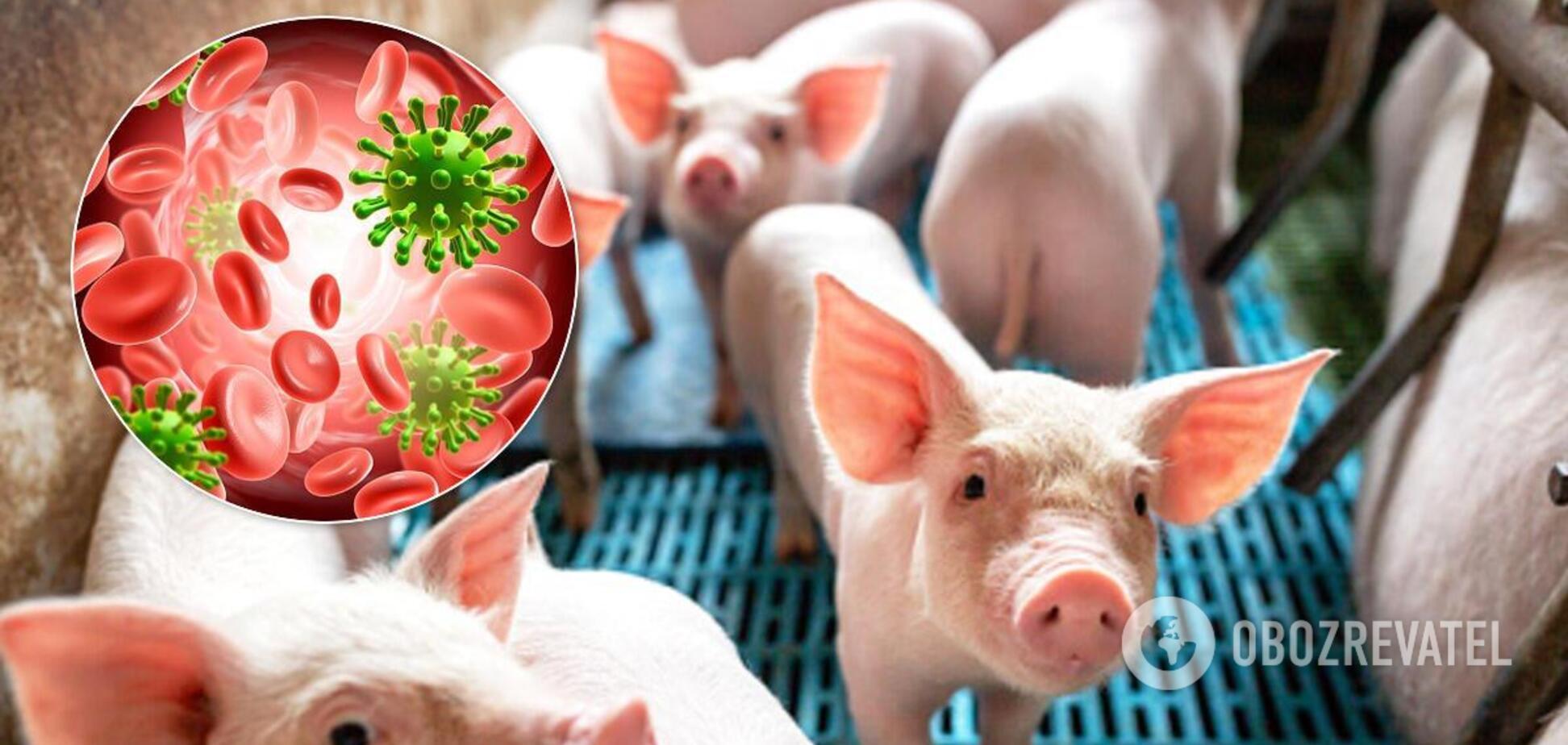 Свинячий грип у Китаї