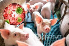 Свиной грипп в Китае