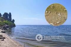 На Днепропетровщине массовый мор рыбы: чиновники объяснили ЧП. Фото